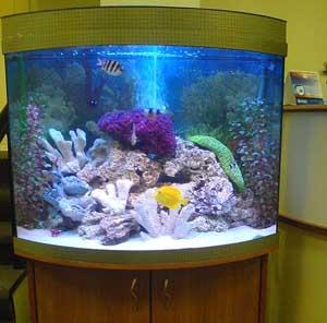 Ev interyerində akvariumlar