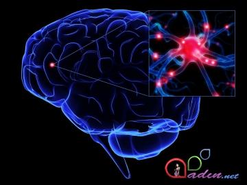 Beyin haqqında miflər(2)