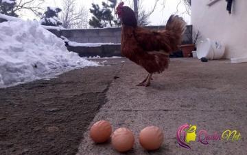 Qeyri-adi yumurtalar görənləri TƏƏCCÜBLƏNDİRİ-FOTO